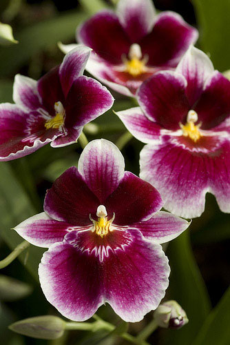 orchid names