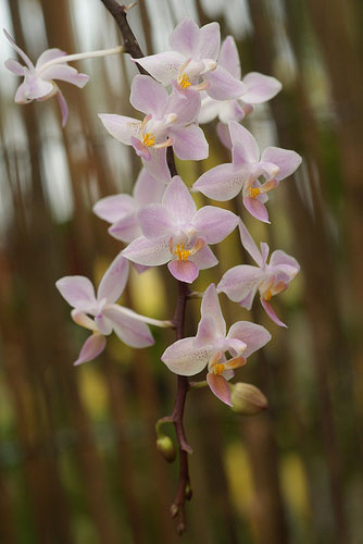 Names Of Orchids | www.pixshark.com - Images Galleries ...