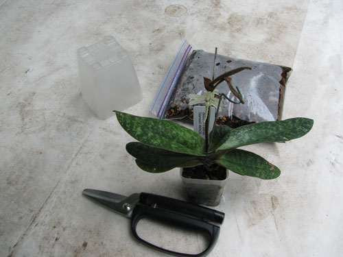 Gathering materials to repot an orchid
